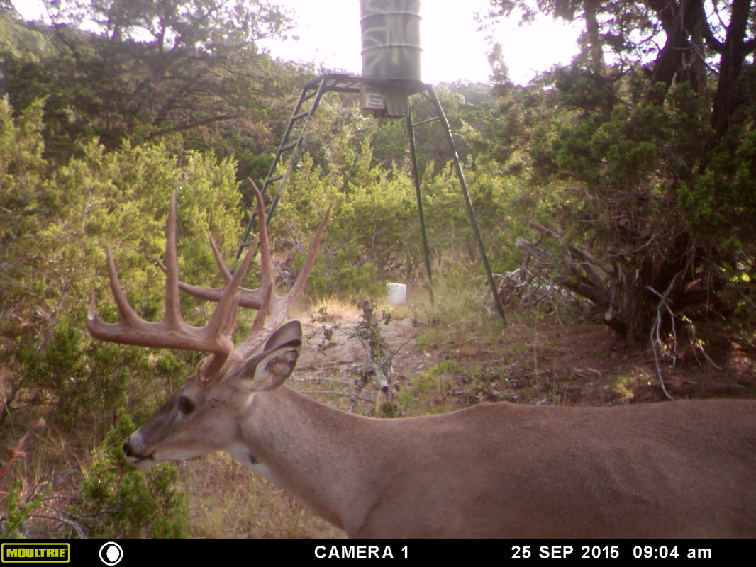 deer is d trail moultrie field stream camera feeder p